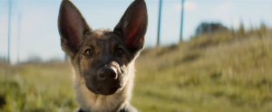 dog s purpose ellie